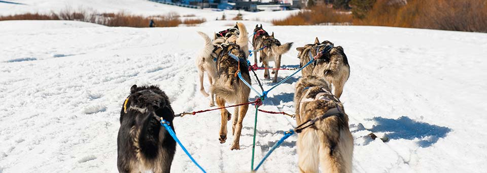 Dog sledding and sleigh rides insurance